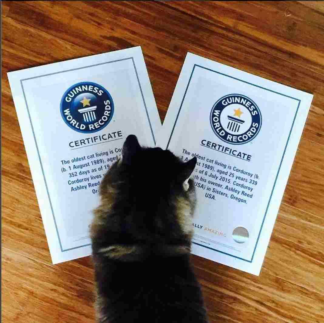 Mèo được chứng nhận