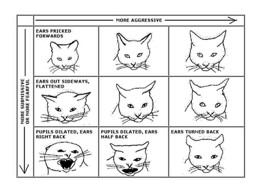 meow bộc lộ cảm xúc qua tai