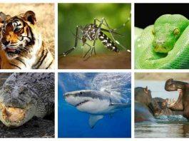 động vật nguy hiểm