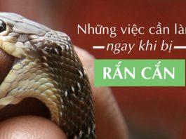 cách sơ cứu khi bị rắn cắn