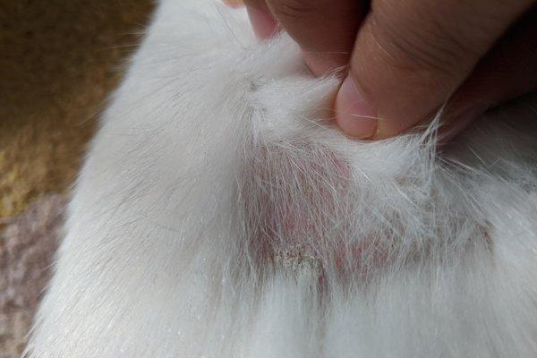 Mèo bị nấm