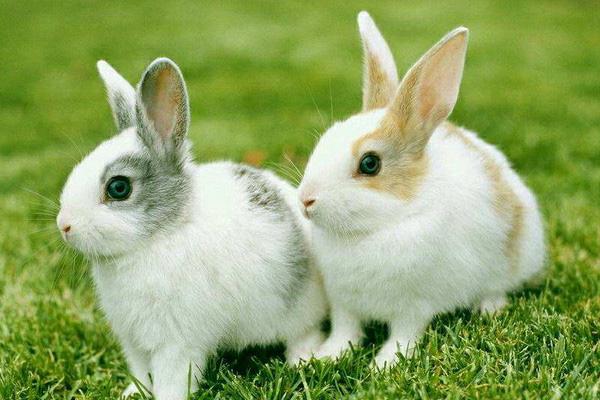 nuôi thỏ làm thú cưng